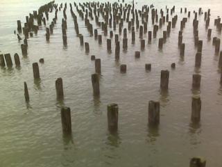 pilings-080217.jpg